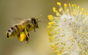 The Bees Pollen Humper