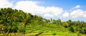 Tricksters Choice Southeast Asia landscape 2